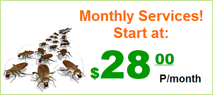 Monthly Service! Start at: $28.00 P/Month